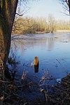 LSG H 00070 Calenberger Leinetal - Teich an der Calenburg (16).jpg