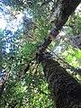 La Amistad Panama Biosphere Reserve - Parque Nacional Volcan Baru (a core zone) 25.JPG