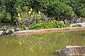 Lago de los Kois - Jardín Botánico Canario Viera y Clavijo - Gran Canaria - 01.jpg
