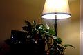 Lamp in Dark.jpg