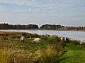 Landgeiten op de Jilt Dijksheide.jpg
