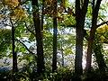 Lantz Pond though the Trees - panoramio.jpg