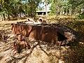 Laura QLD 4892, Australia - panoramio (3).jpg