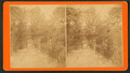 Laurel Grove Cemetery, Savannah, Ga, from Robert N. Dennis collection of stereoscopic views.png