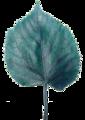 Leafblue2.png