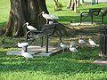 Leesburg FL Venetian Gardens birds03.jpg