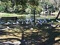 Leesburg FL Venetian Gardens birds09.jpg