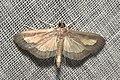 Lepidoptera (15431485403).jpg