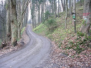 Forest road - Forest road in North Bohemia
