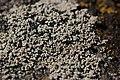 Lichen (44208447644).jpg