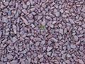 Life among gravel.jpg
