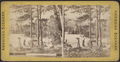 Life at Lake George, from Robert N. Dennis collection of stereoscopic views.png