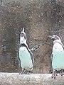 Life is beautiful--Penguins.jpg