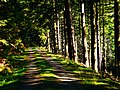 Light In The Black Forest - panoramio.jpg