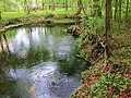 Lily Spring bubbles up - panoramio.jpg
