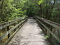 Little River Trail 10, Reed Bingham Park.JPG