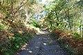 Lochside track - geograph.org.uk - 578099.jpg