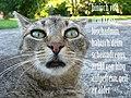 LolCat blogdelete de.jpg