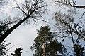 Look Up (155371417).jpeg
