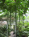 Luffa aegyptiaca fruits 02.jpg