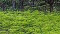 Lugnets naturreservat 2019-05-23 02.jpg