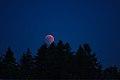 Lunar Eclipse 2018 SG 010 (29823675698).jpg