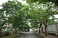 Một góc phố trong khu biệt thự cao cấp Đỉnh Long, thành phố Hải Dương, tỉnh Hải Dương.jpg