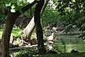 MADRID PARQUE de MADRID ESTANQUE APORTACIONES VIEW Ð 6 K - panoramio (6).jpg