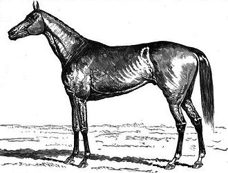 Melbourne Cup - Martini-Henry, the 1883 Melbourne Cup winner