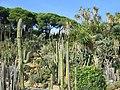 MARiMUTRA 009 - Cactus 5 - panoramio.jpg