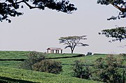 Malawi Tea Estate.jpg