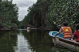 Manglares de Tumbes by boat