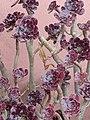 Mantis religiosa brown Italy1.jpg