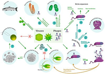 Marine microorganism - Wikipedia