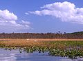 Mattawoman tidal with two egrets in flight 27-259.jpg
