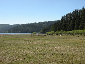 Potatso National Park - Meadow in Pudacuo