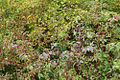 MeadowbrookFoliage (5118396488).jpg