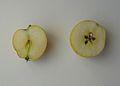 Mela renetta ananas 1.jpg