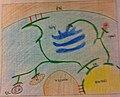 Membrane contact sites in eukaryotic cell (crayon diagram).jpg