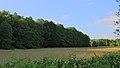 Mettingen Naturschutzgebiet Rote Brook 05.JPG