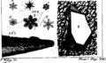 Micrographia illustrata Fleuron T039334-57.png