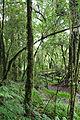 Moist evergreen forest, Ang Ka Nature Trail.JPG