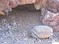 Mojave Desert Tortoise (Gopherus agassizii) (6012500218).jpg