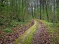 Monarch's Way in Whitedown Plantation - geograph.org.uk - 1279764.jpg