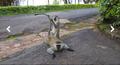 Monkey in Arboretum of Ruhande in Rwanda.png