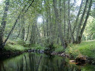 Protected areas of Portugal - The rich forests of the Montesinho Nature Park