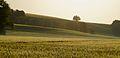 Morgenstunden - Die Felder der Sächsischen Schweiz.JPG