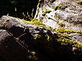 Moss (17036240451).jpg