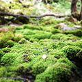 Moss covered stones.jpg