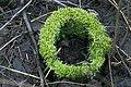 Moss on tree 01(js), Biebrza National Park (Poland).jpg